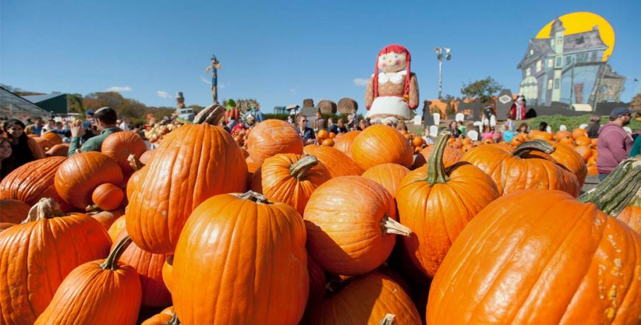 header-pumpkinland1-907×460